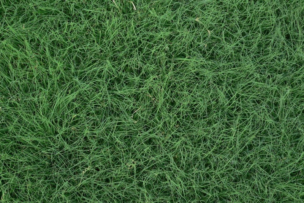 buffalo-grass-eco-1024x683